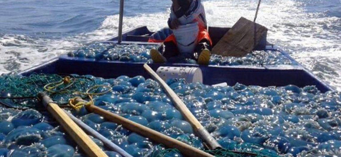 """Aguamala no será """"tablita de salvación"""" como otros años: Pesca"""