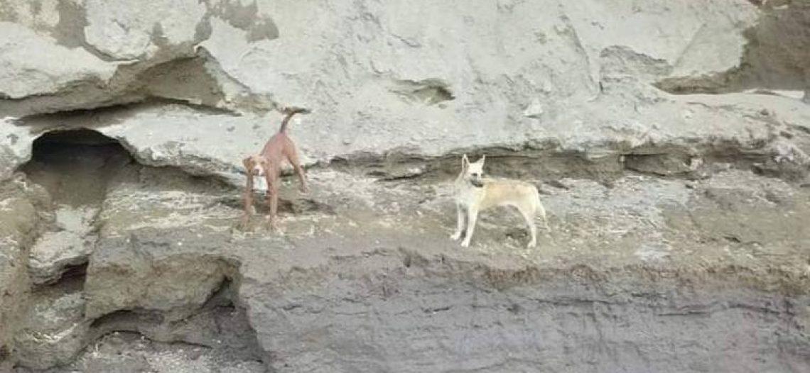 Quedan perritos atrapados en socavón de Puebla; rescatistas esperan autorización
