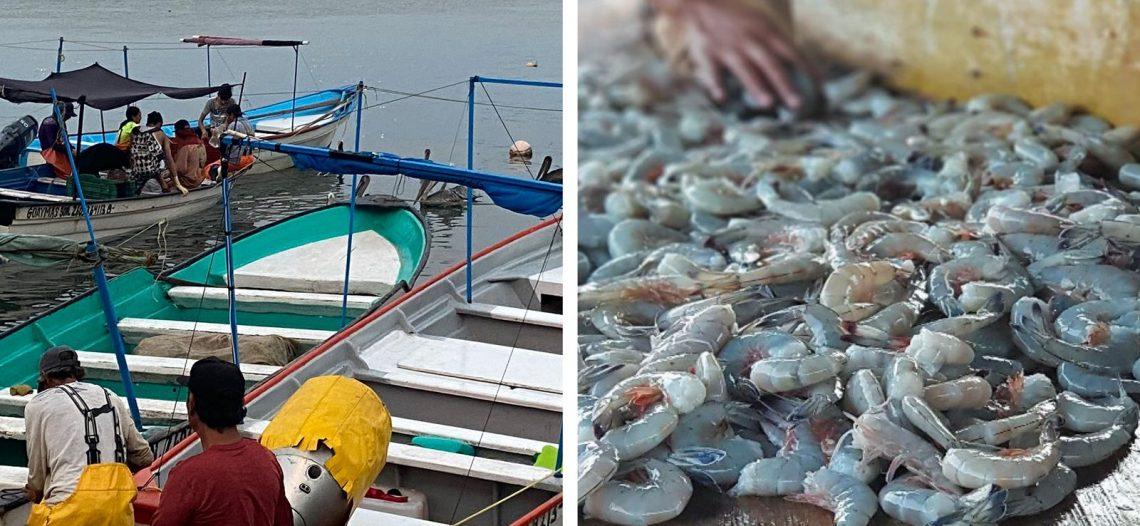 Finaliza la veda e inicia este martes la pesca ribereña del camarón